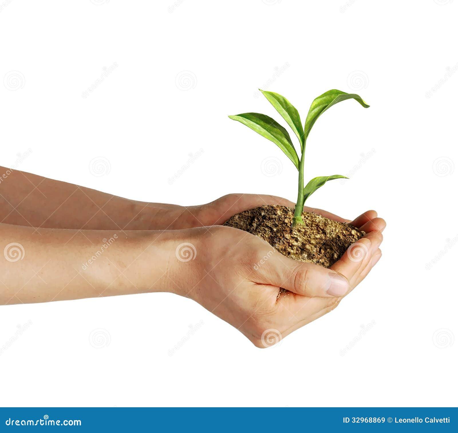 Les mains de l 39 homme tenant le sol avec une petite plante for Plante 5 doigts bahamas