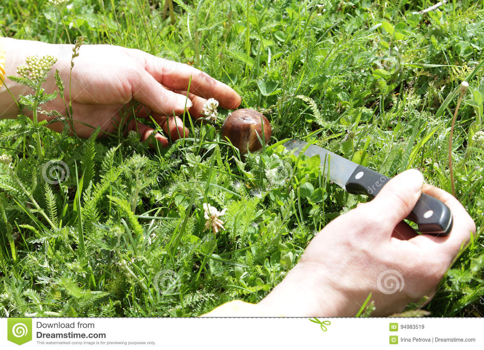 Les mains femelles ont coupé les champignons avec un couteau