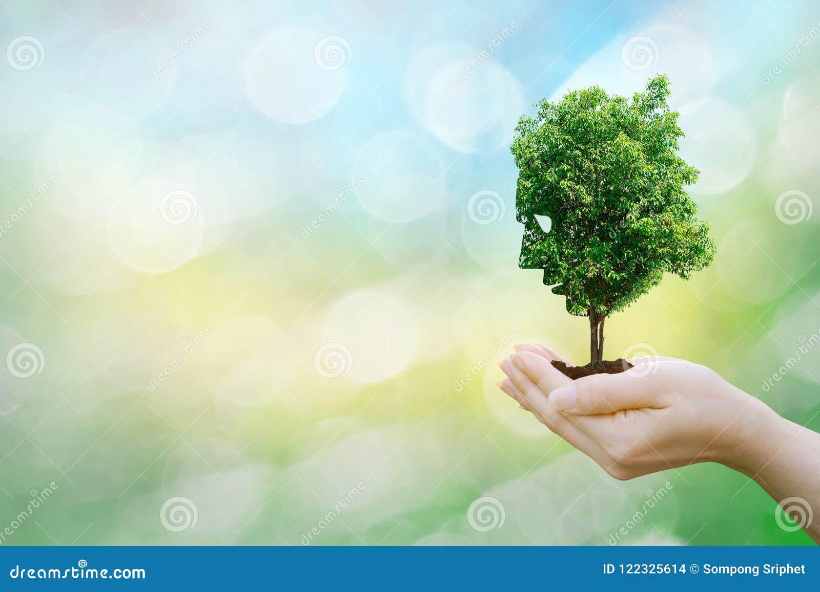Les mains humaines de concept d écologie tenant le grand arbre de visage d usine regardent l environnement du monde