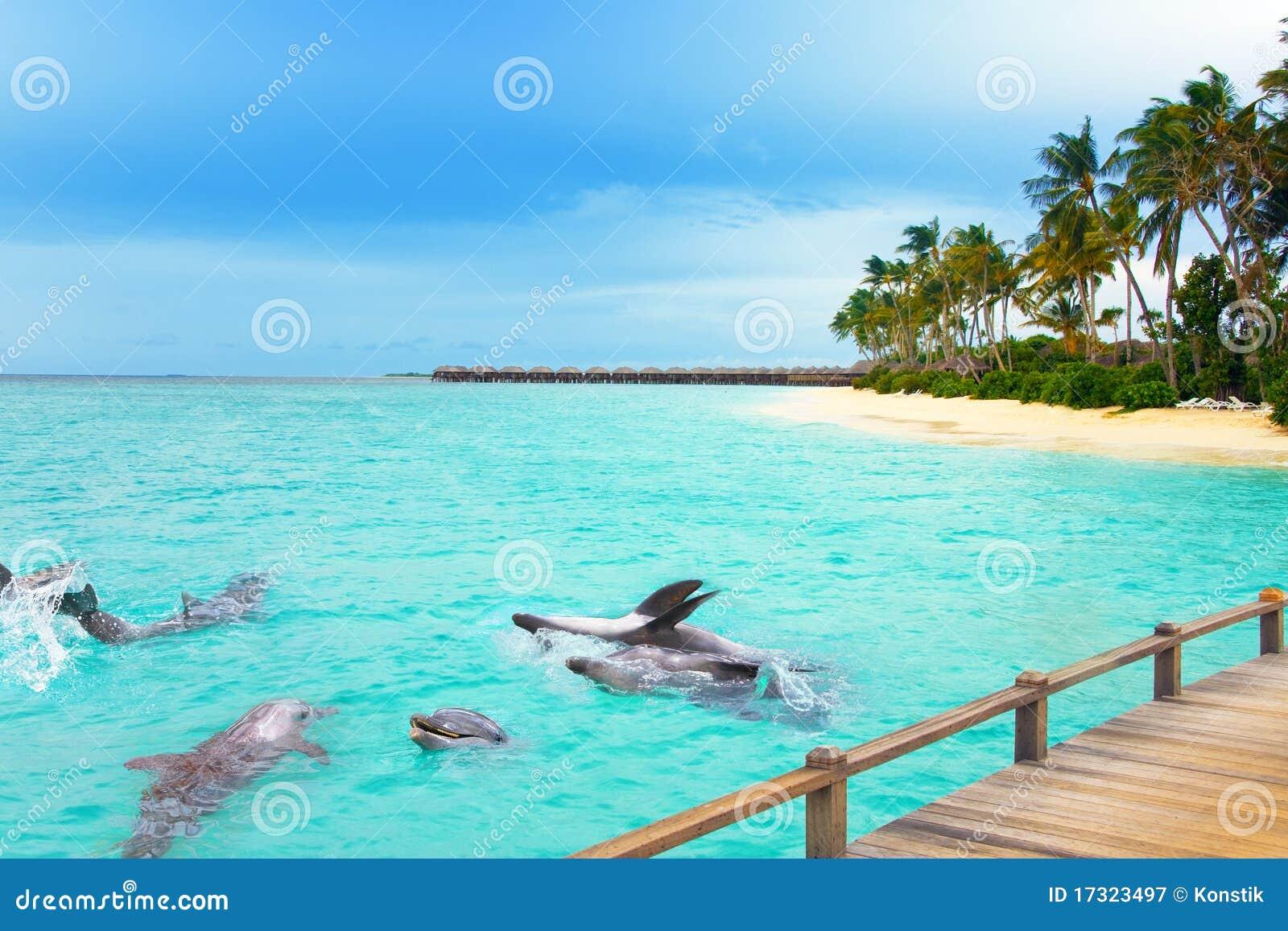 lile maldive