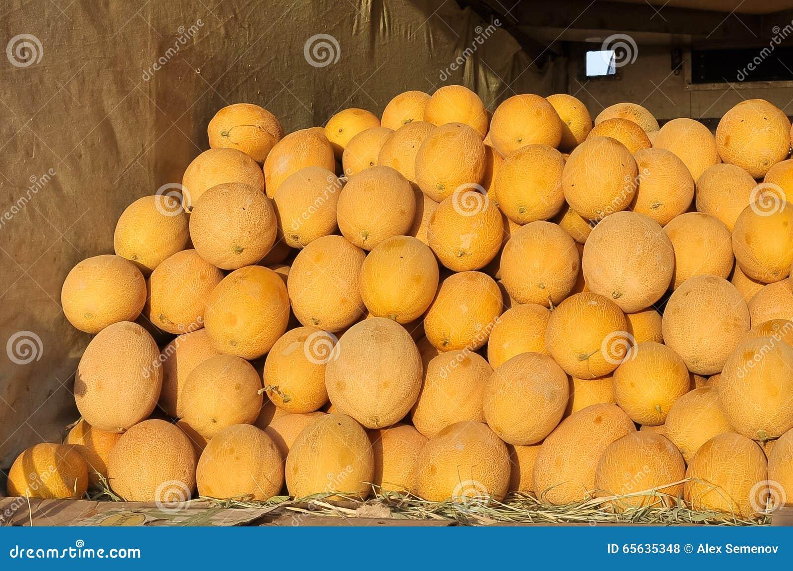 Les melons jaunes ronds d Ouzbékistan sont dans le camion
