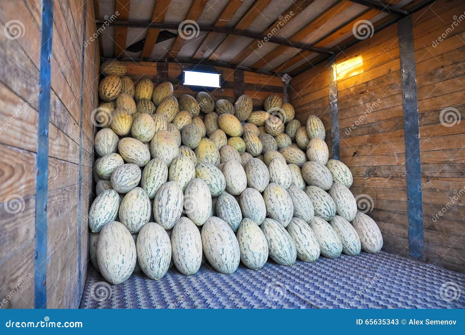 Les melons ovales d Ouzbékistan de cultivar sont dans le camion