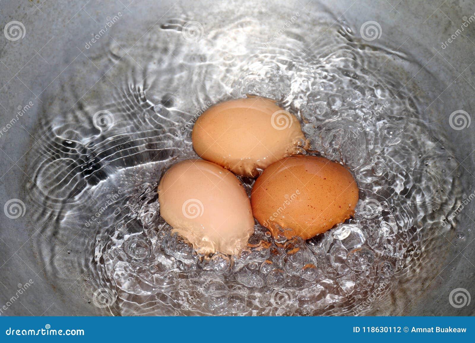 Les oeufs, oeuf à la coque dans la casserole, jaune rougeâtre d oeufs crus en eau chaude bout faisant cuire le foyer sélectif