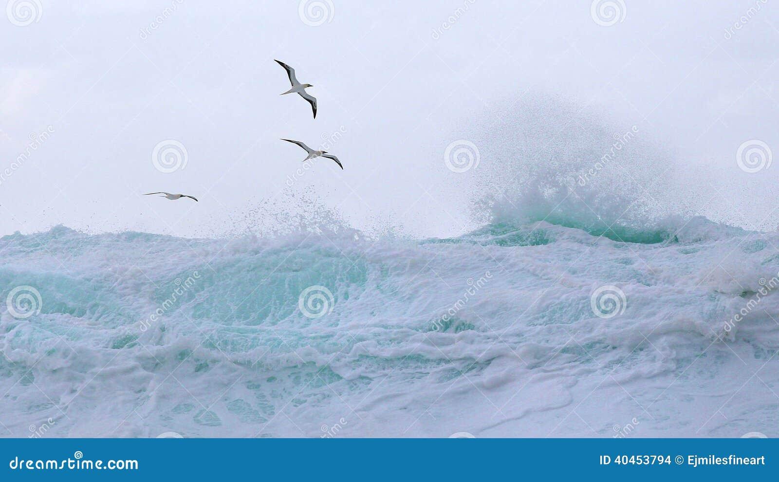 Les oiseaux tropicaux montent au-dessus des vagues
