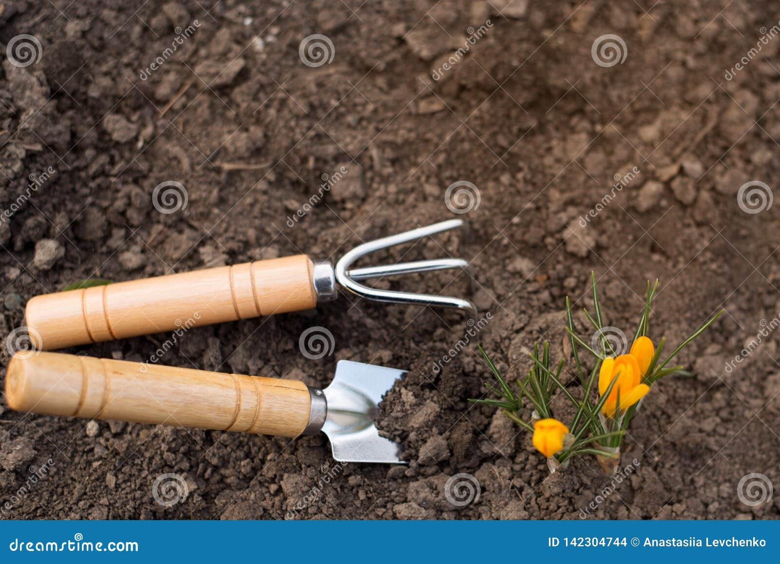 Les outils font du jardinage sol avec de petites fleurs de couleur sur le fond de nature Place pour le texte Concept de jardinage