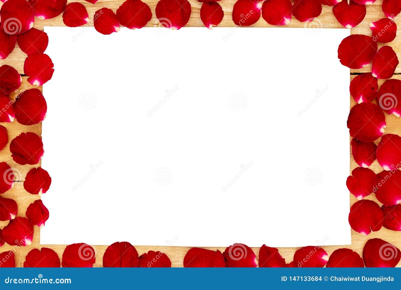 Les pétales de rose ont arrangé dans un cadre blanc