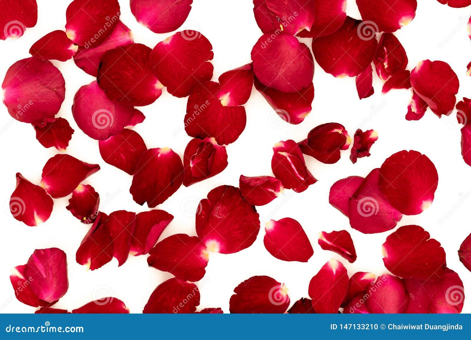 Les pétales de rose ont arrangé dans un modèle