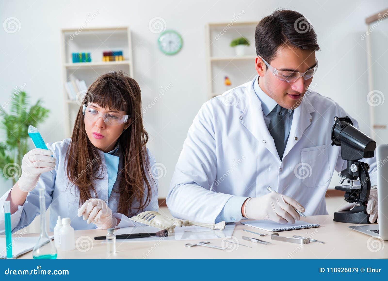 Les paléontologues regardant des os des animaux éteints
