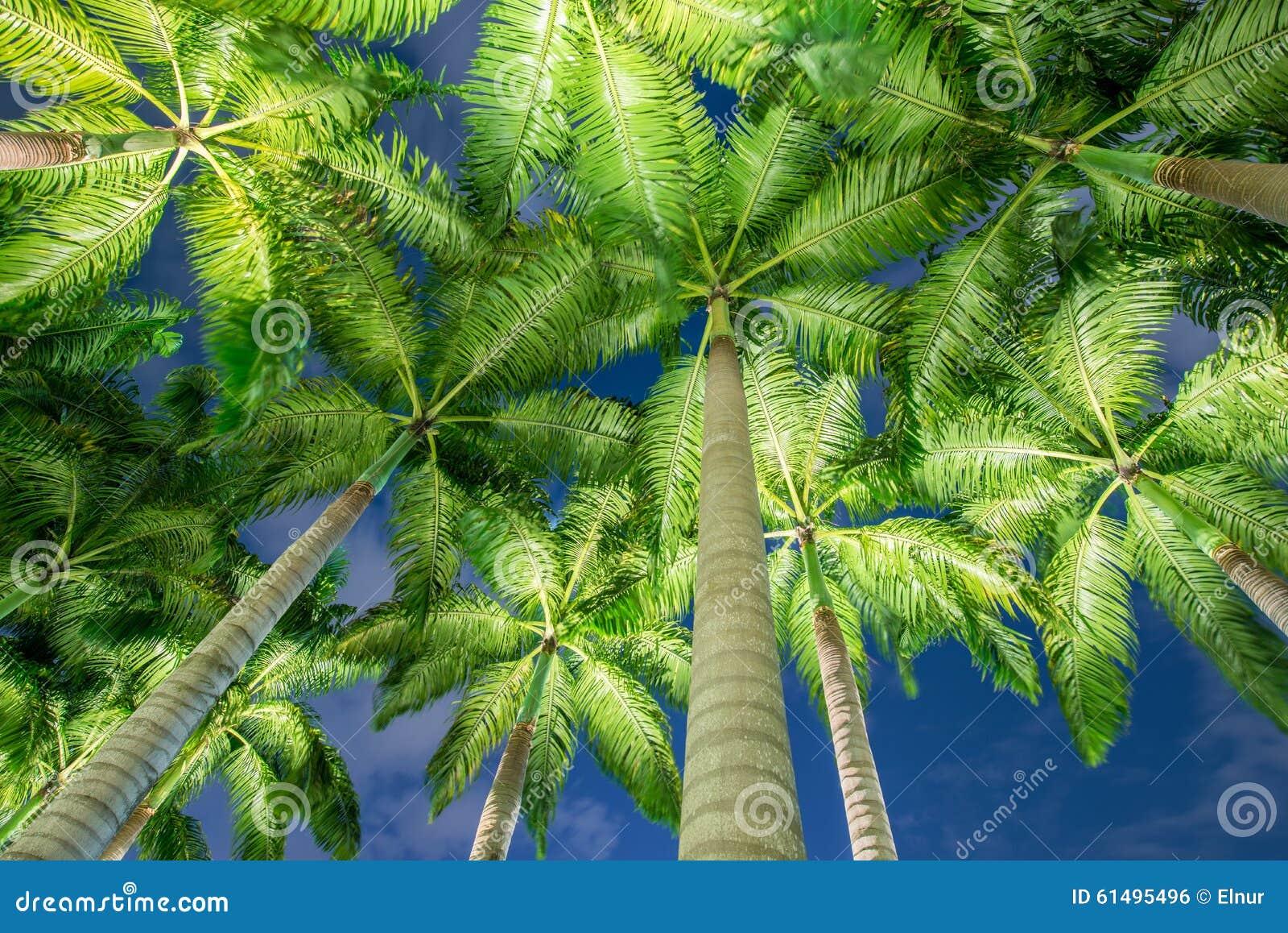 Les palmiers pendant les heures de coucher du soleil photo stock image du c te outdoors 61495496 - Heures coucher du soleil ...