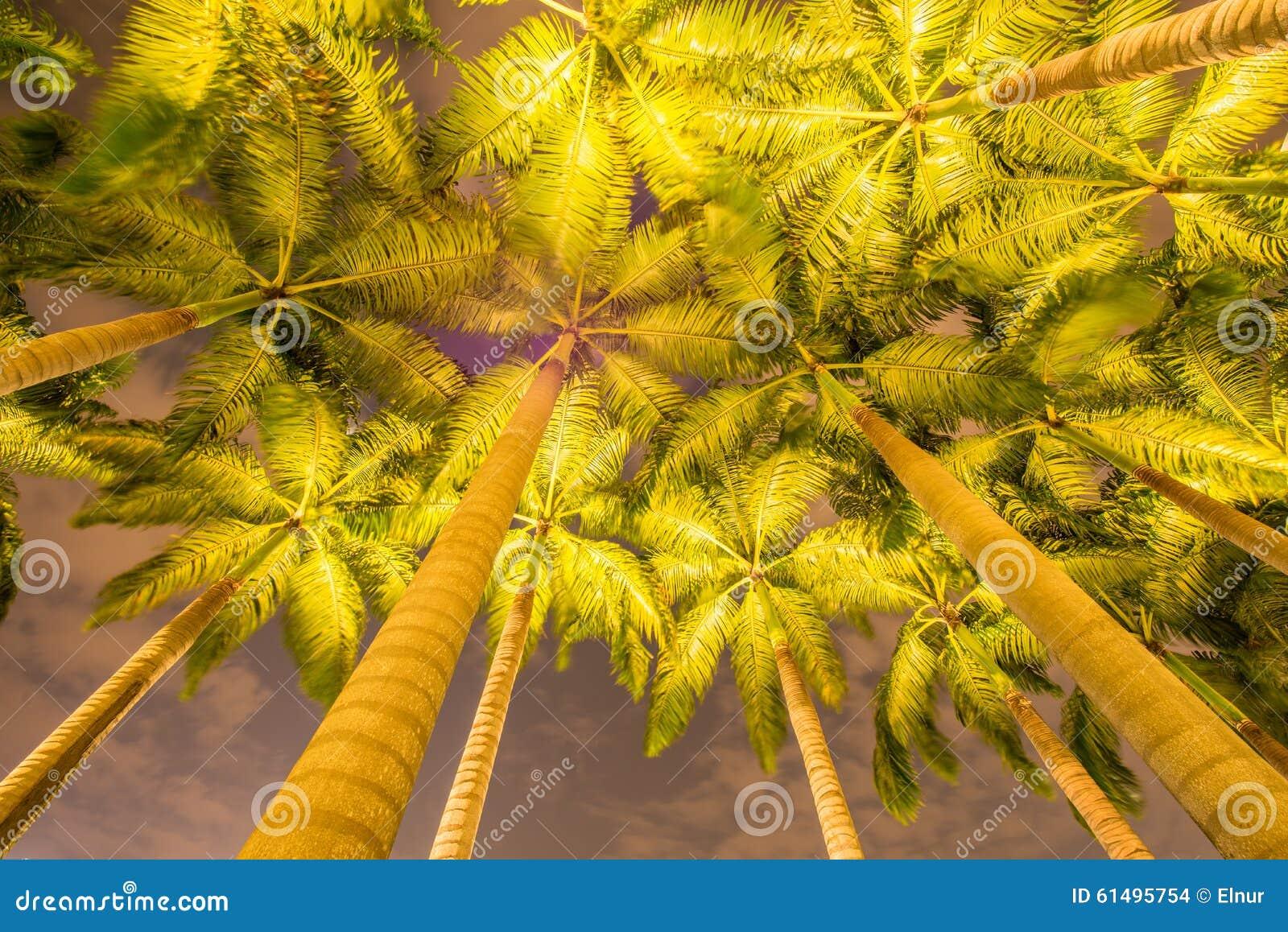 Les palmiers pendant les heures de coucher du soleil photo - Horaire coucher du soleil aujourd hui ...