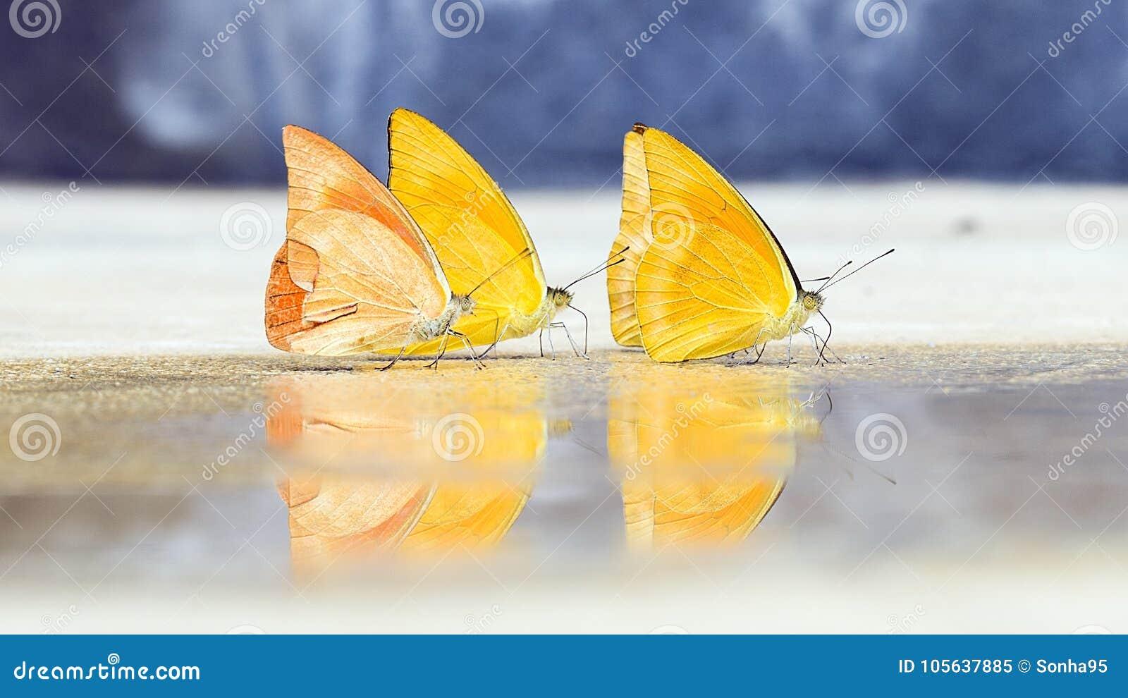 Les papillons apparaissent tôt pendant l été