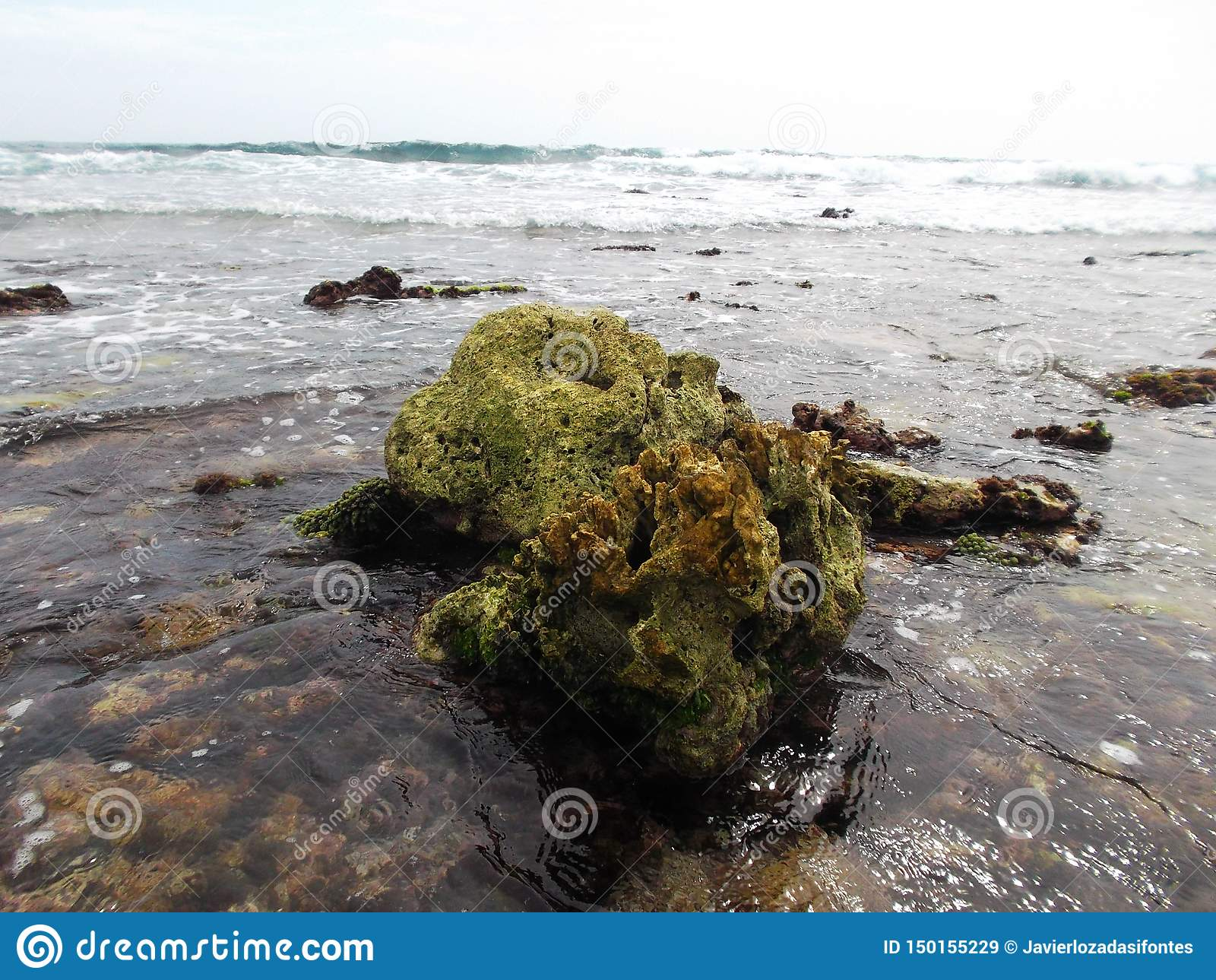 Les pierres ont couvert d algue sur la côte de l île de tortue au Venezuela