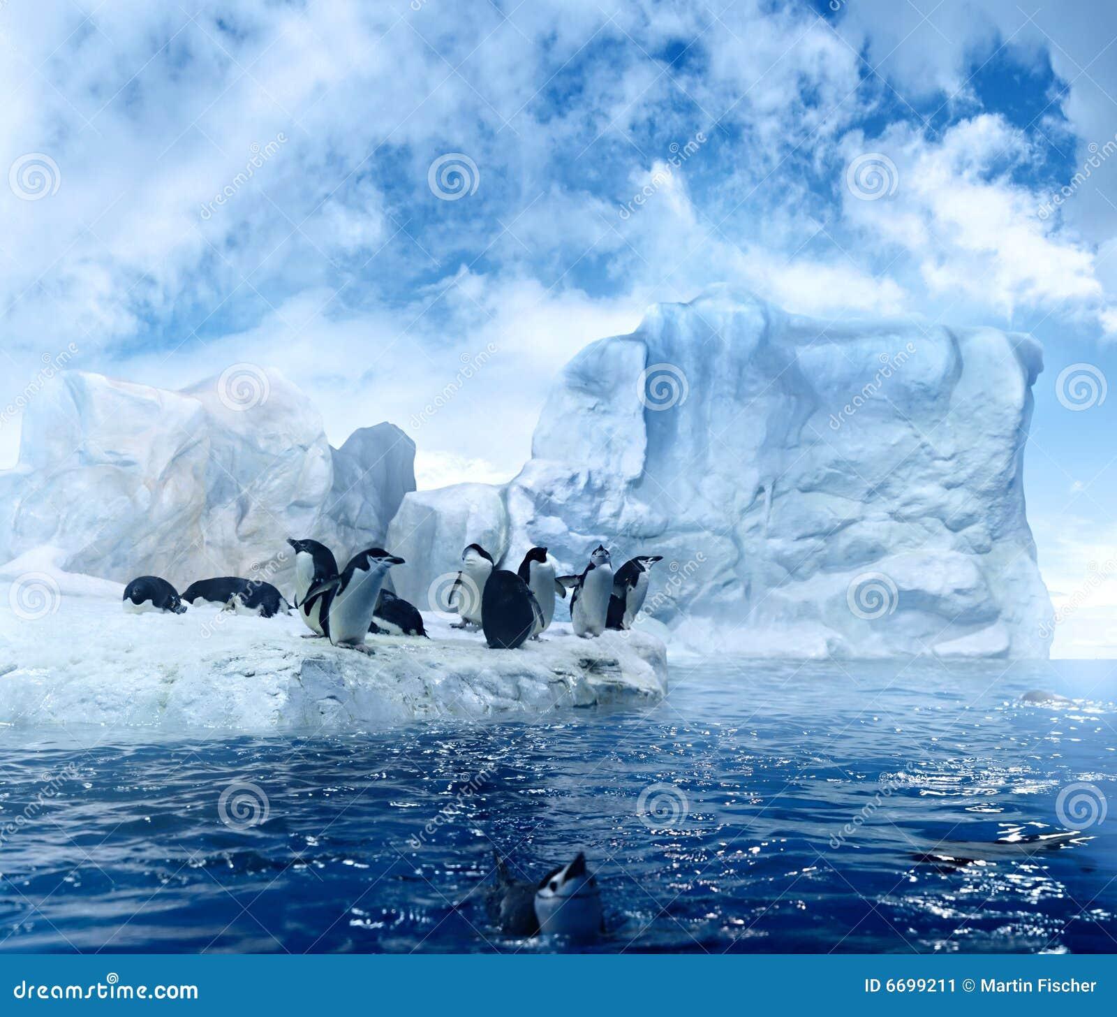 les pingouins sur fondre la banquise image stock image du bleu outside 6699211. Black Bedroom Furniture Sets. Home Design Ideas