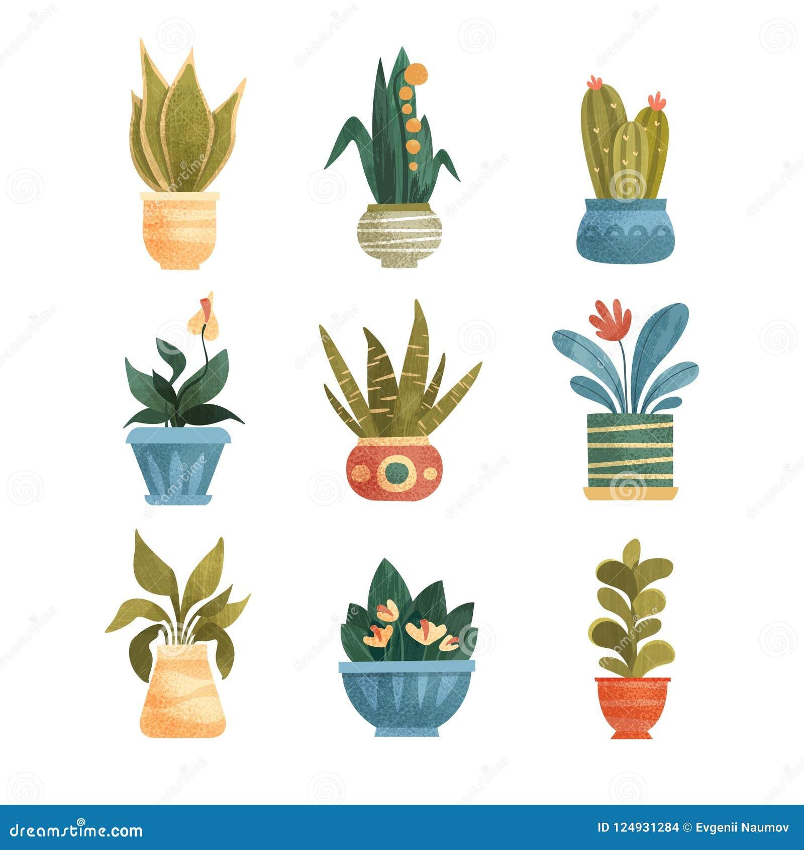 Les plantes d intérieur dans des pots ont placé, maison ou illustrations élégante de vecteur de décor de bureau sur un fond blanc