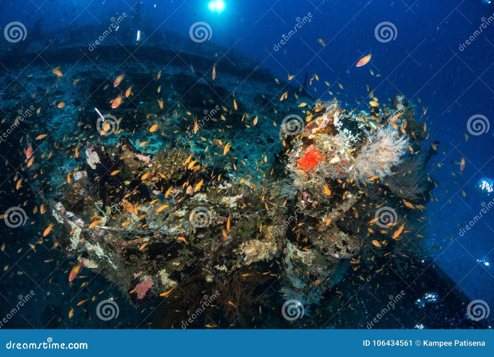 Les plongeurs autonomes et l école des poissons flotte sur l épave - Inde