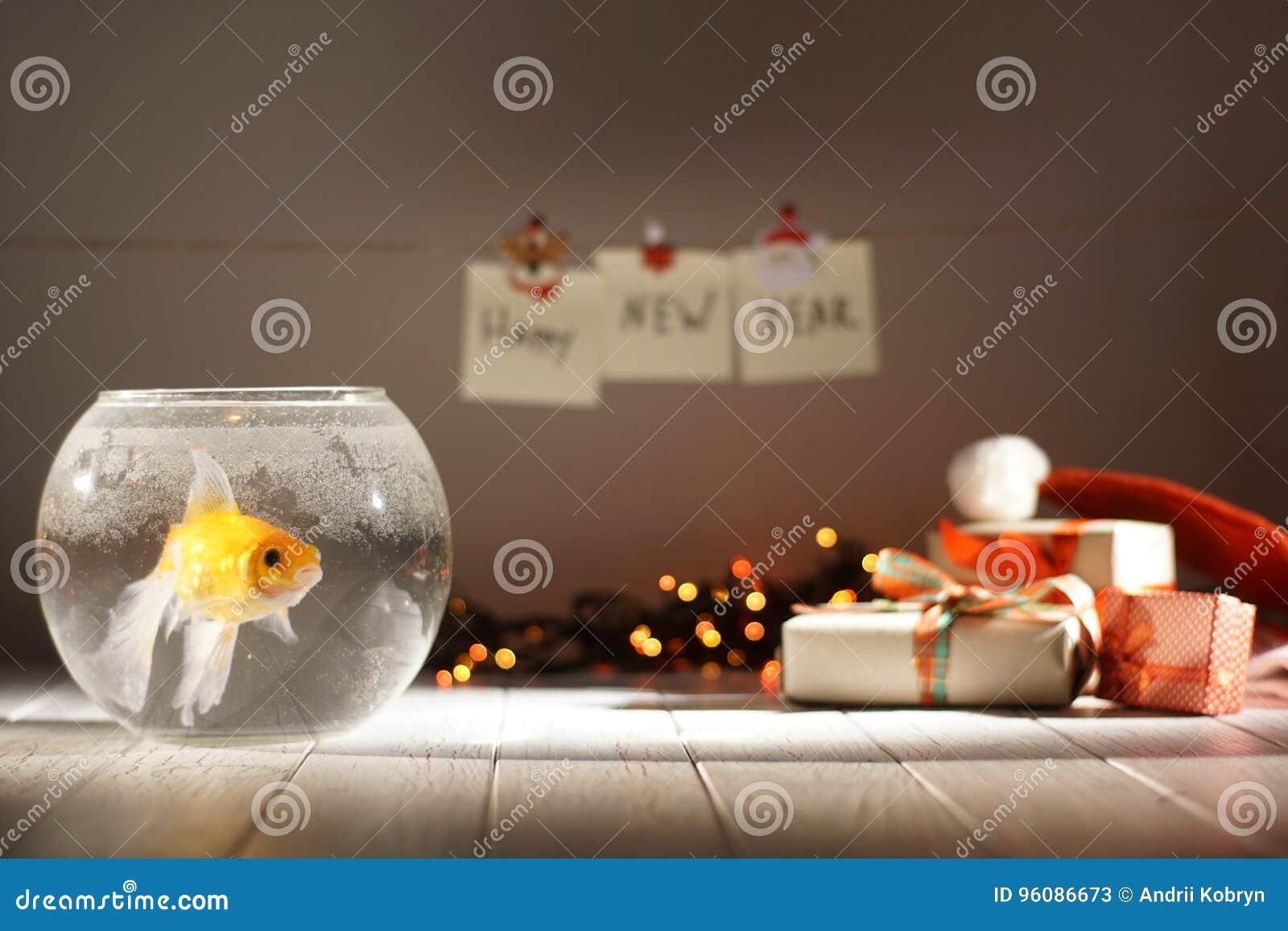 Les poissons d or dans l aquarium circulaire au fond brouillé des cadeaux de Noël, des guirlandes rougeoyantes et de la nouvelle