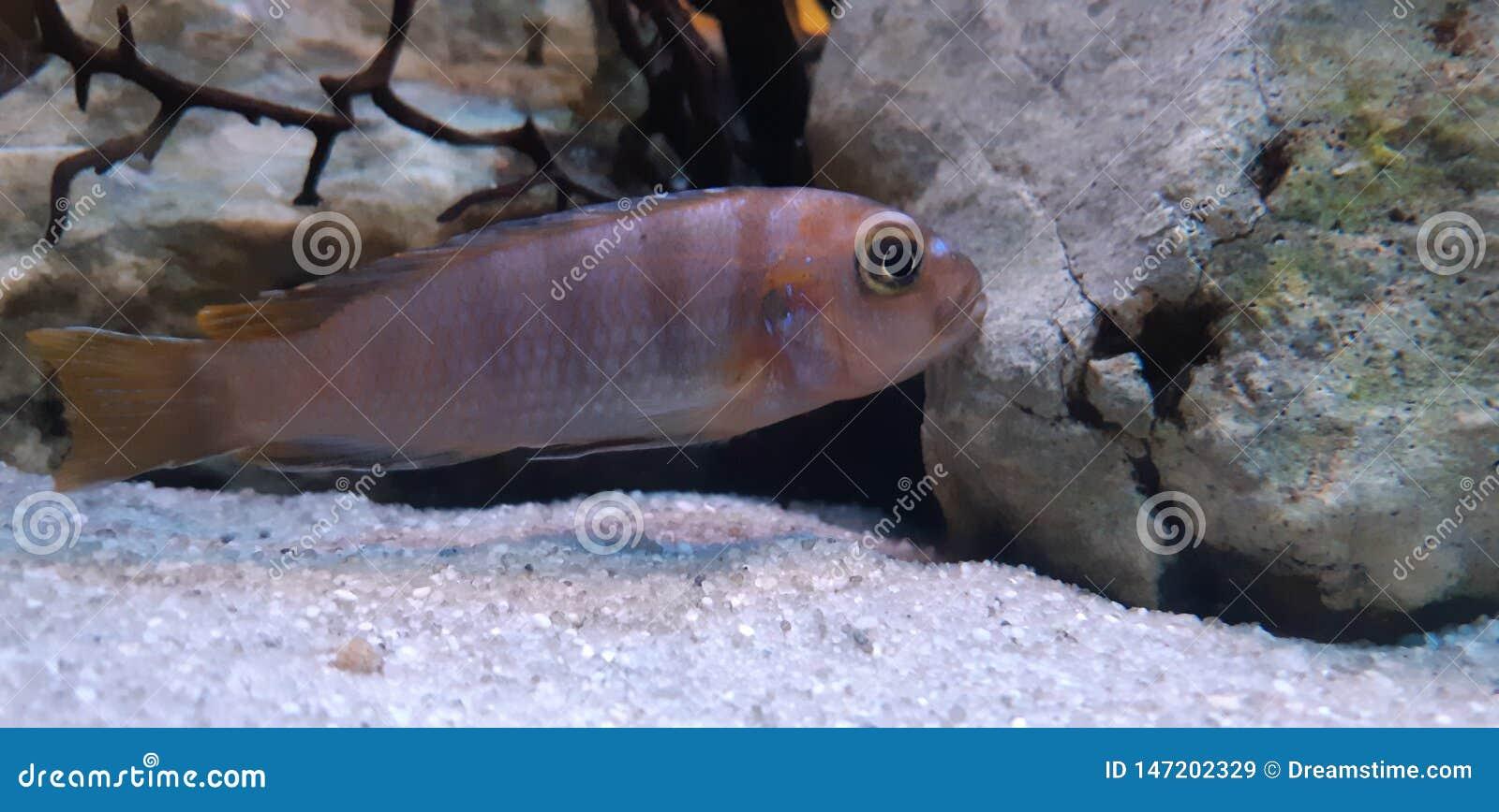Les poissons d océan