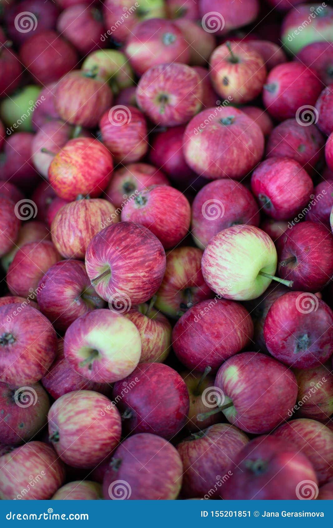 Les pommes fraîches des grands-mères font du jardinage