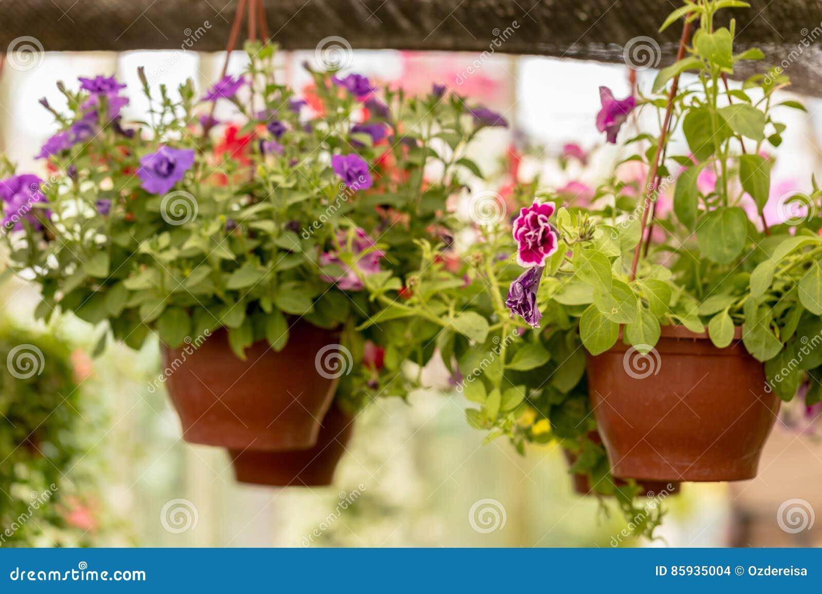 Les pots de fleurs commerciaux accroche en serre chaude - Accroche pot de fleur ...
