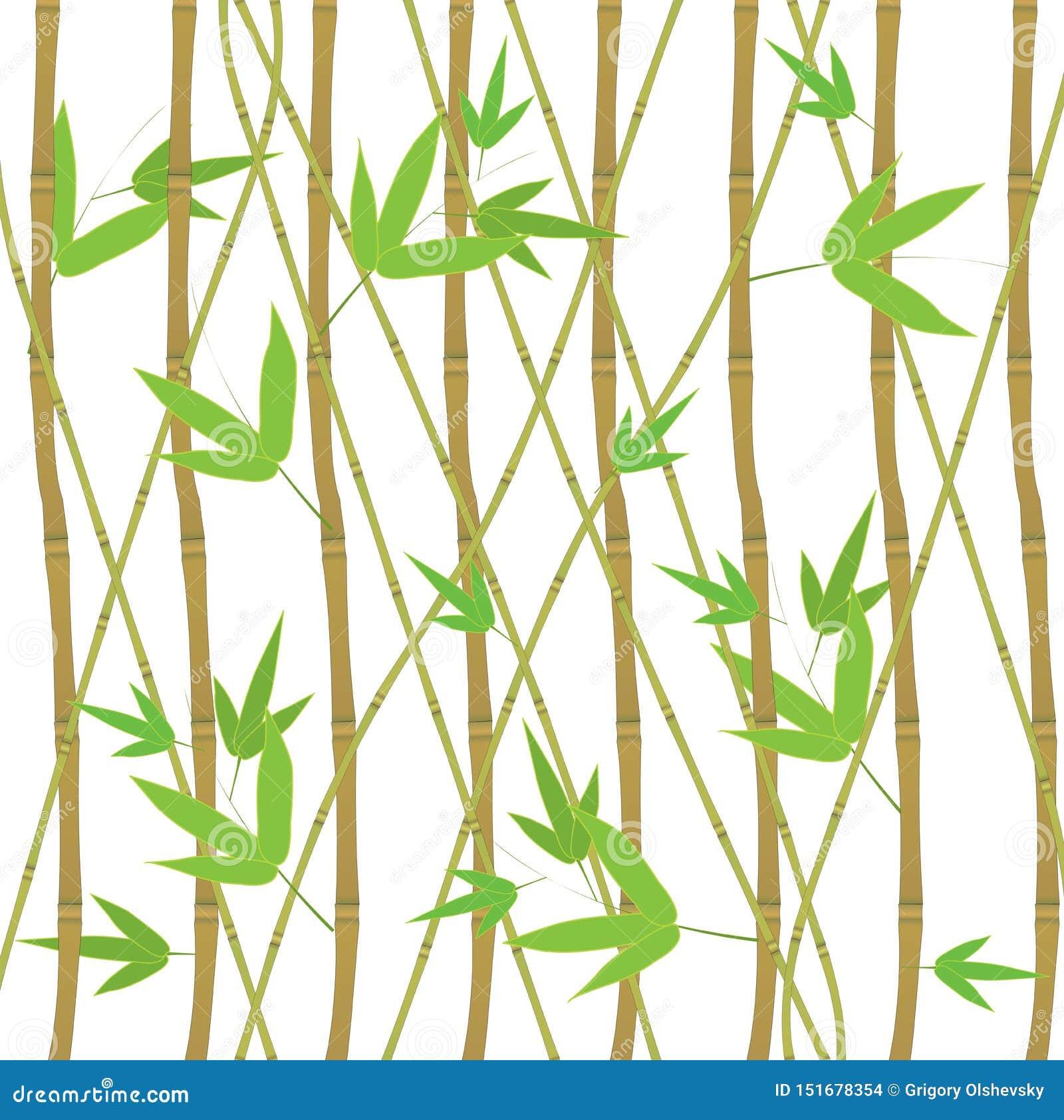 Les pousses de bambou ont placé l élément décoratif d Eco