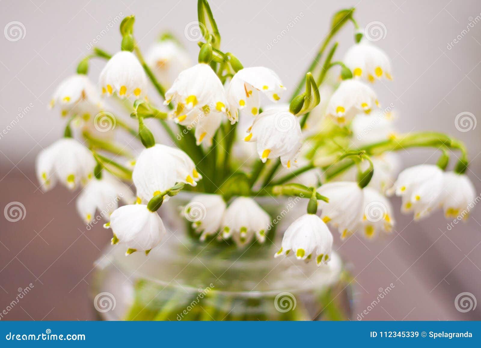 Les premières fleurs du ressort