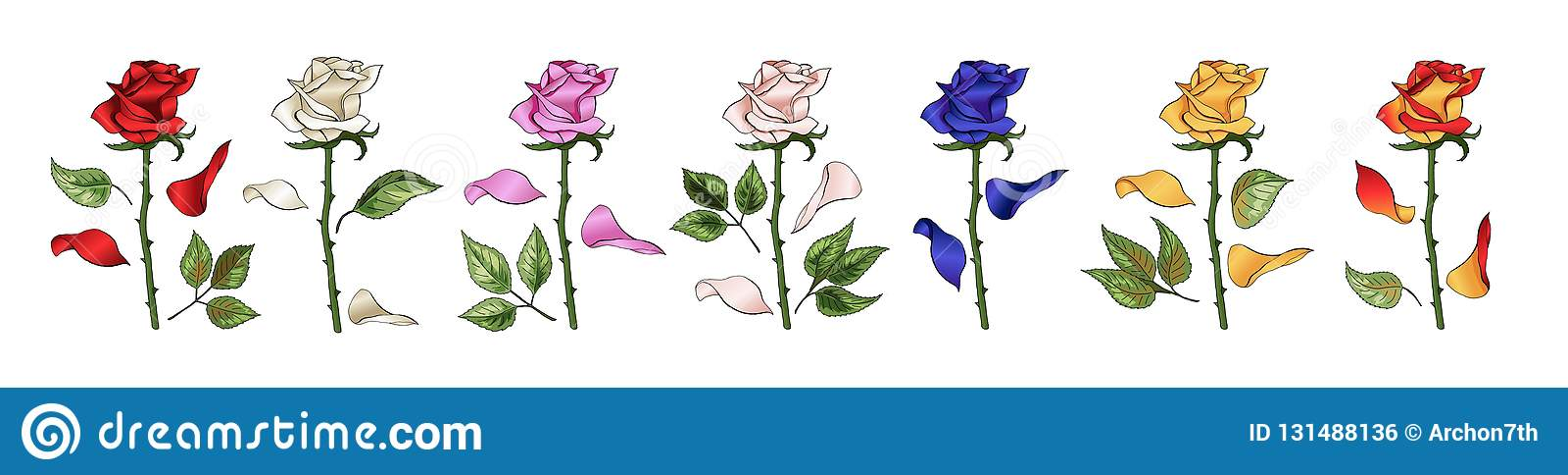 Les roses remettent le dessin et colorées Un ensemble se développant de boutons de rose Illustration de vecteur