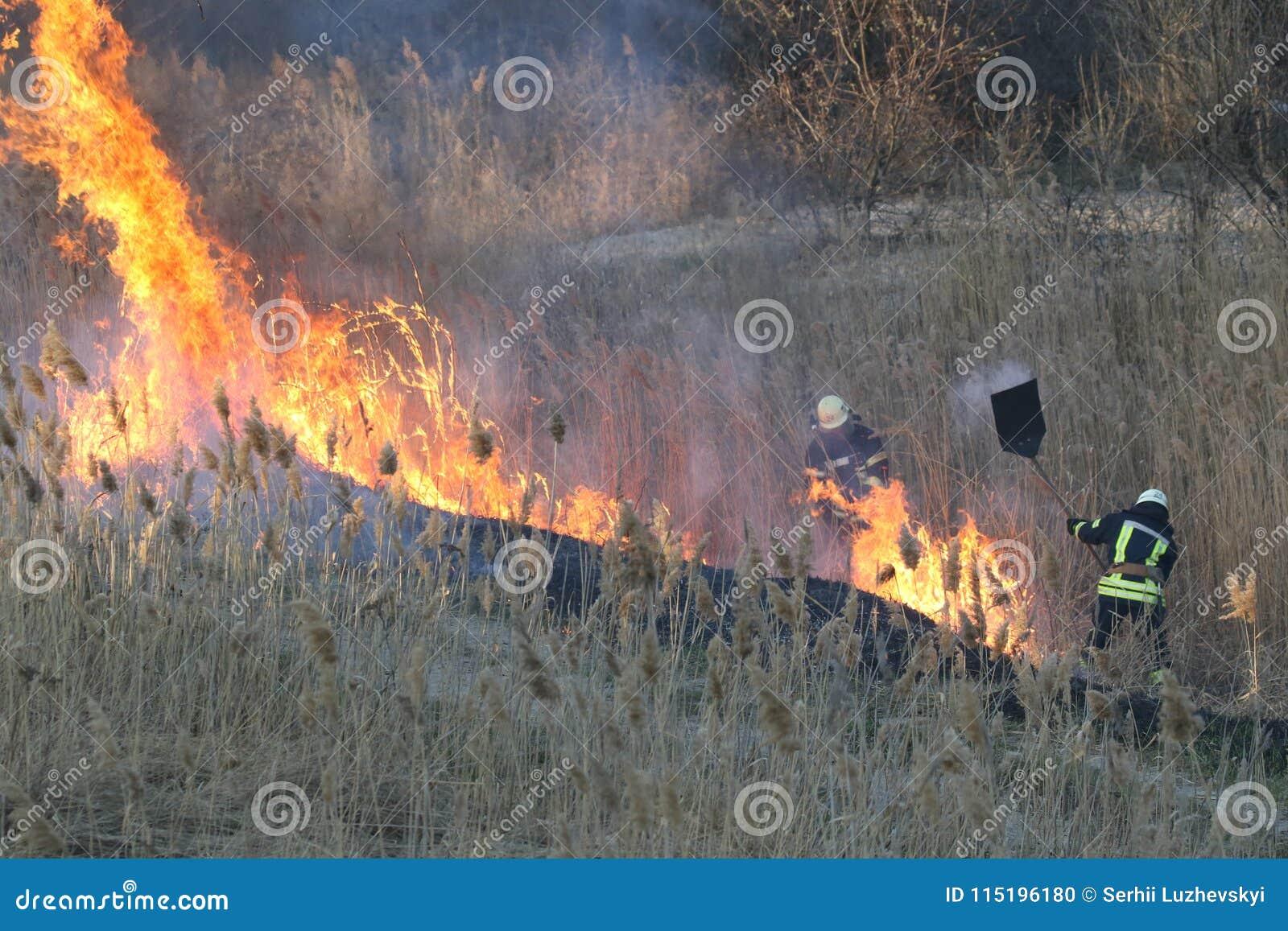 Les sapeurs-pompiers luttent un feu de forêt au printemps