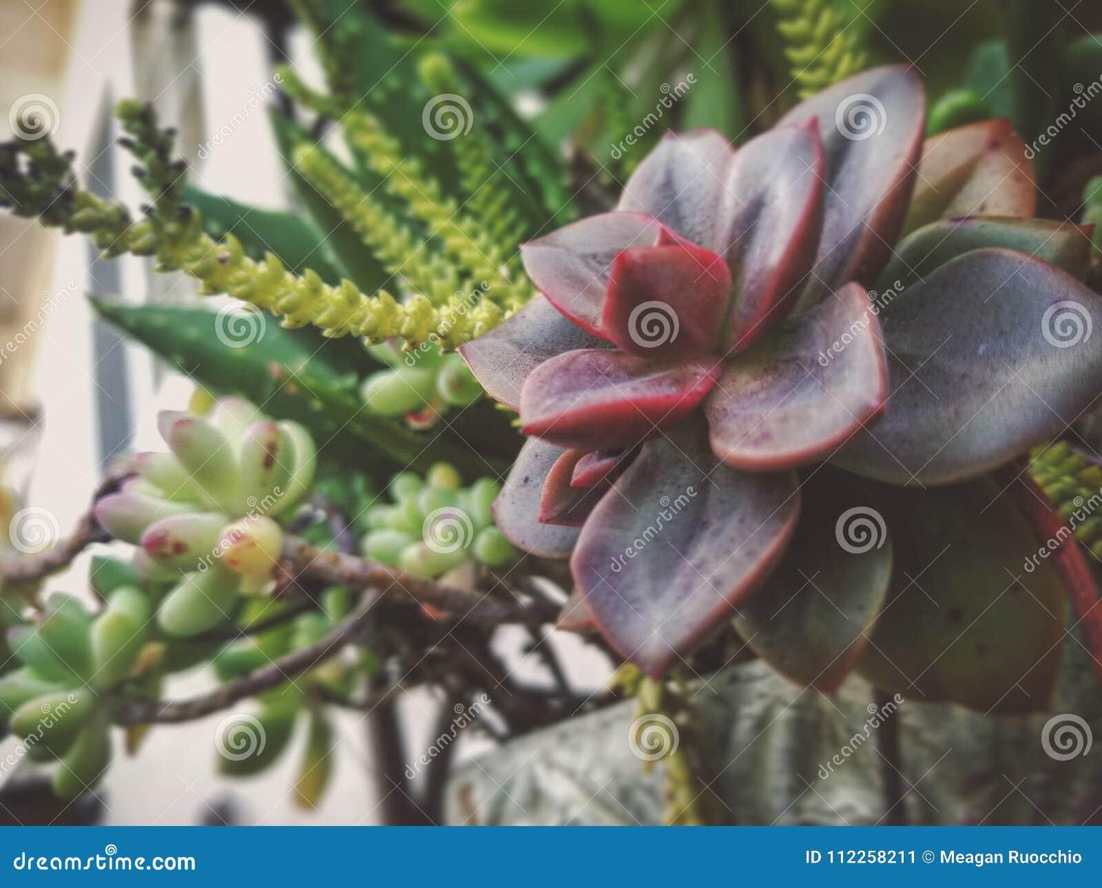 Les Succulents sont bons pour le coeur