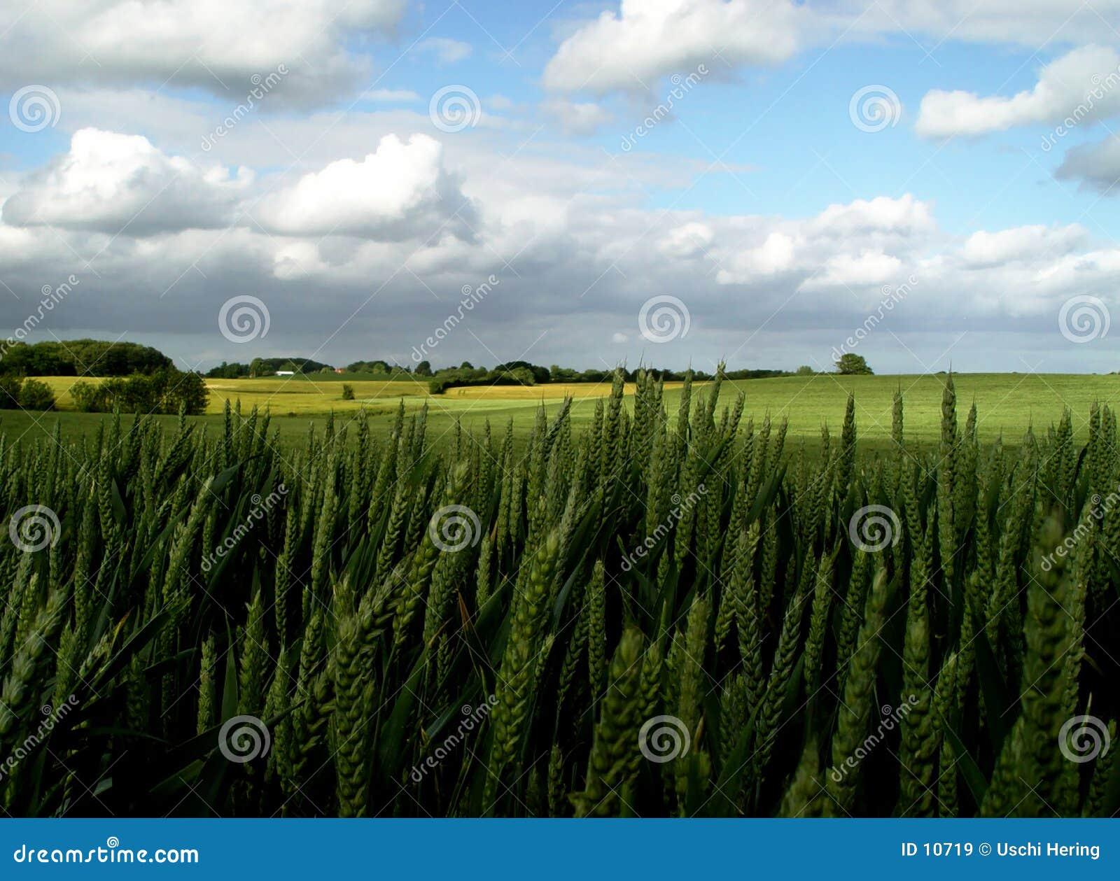 Les terres fertiles