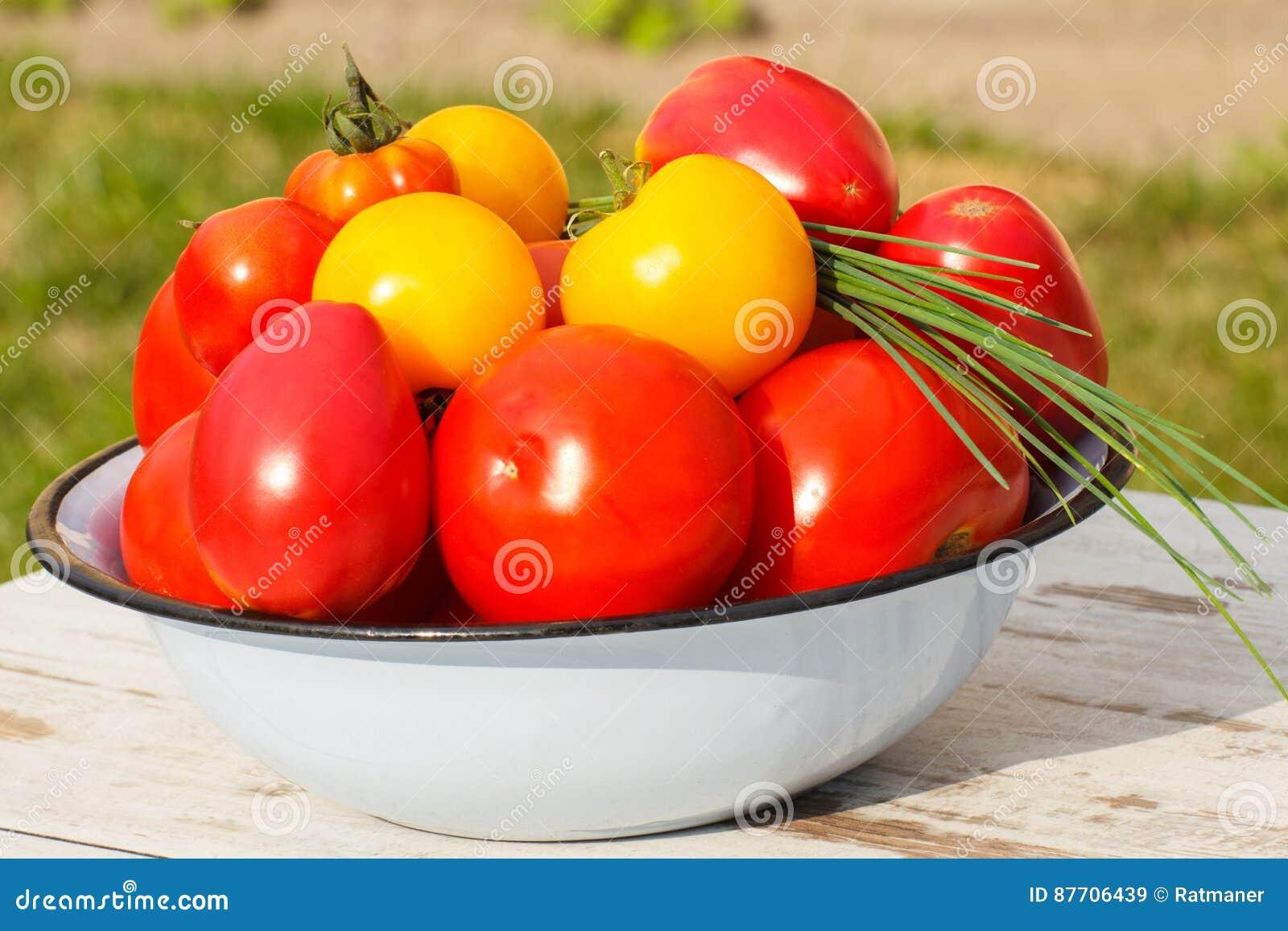 Les tomates en métal roulent avec la ciboulette verte dans le jardin le jour ensoleillé