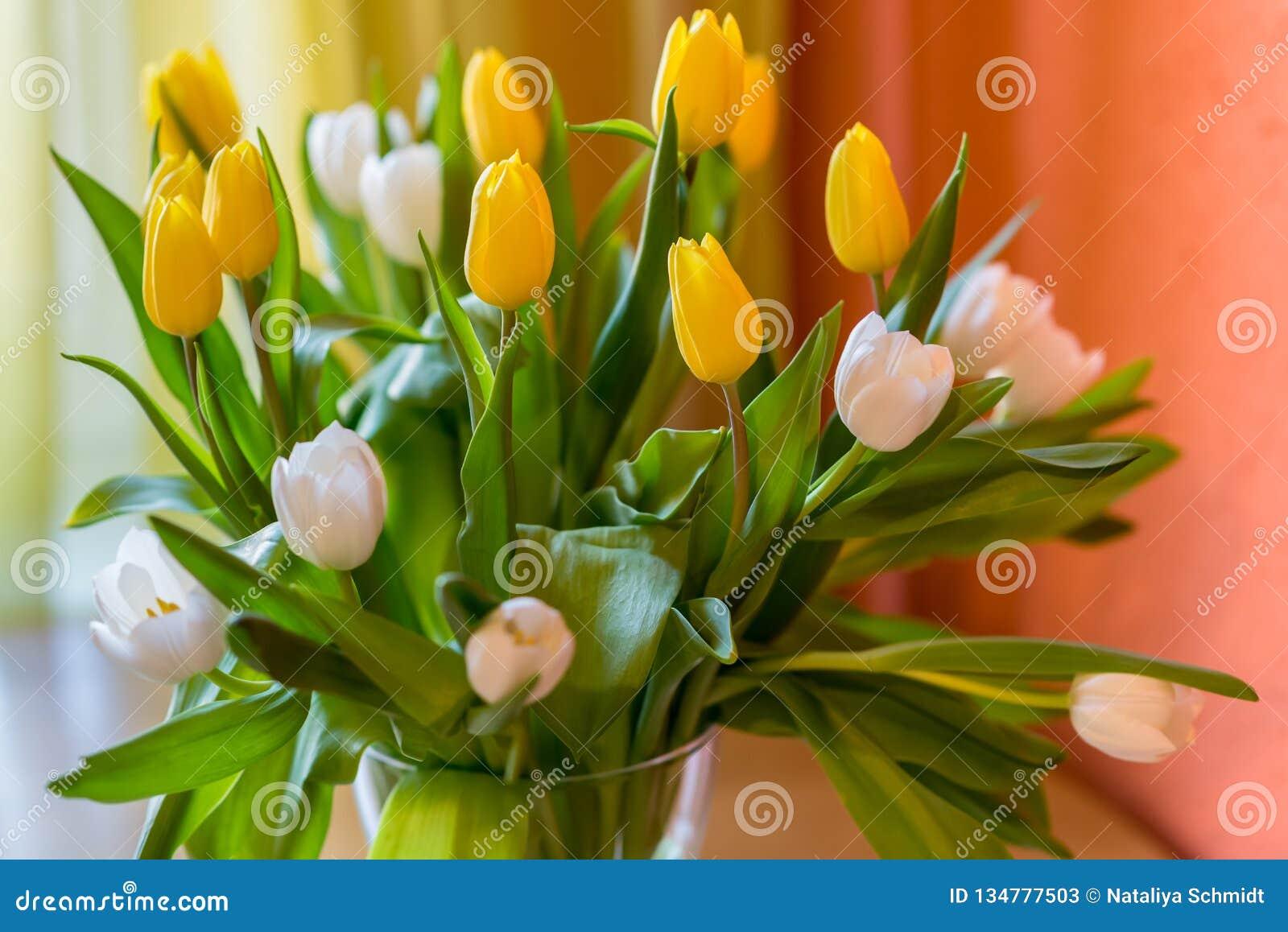 Les tulipes jaunes et blanches jaillissent fleurit le bouquet de Pâques des fleurs