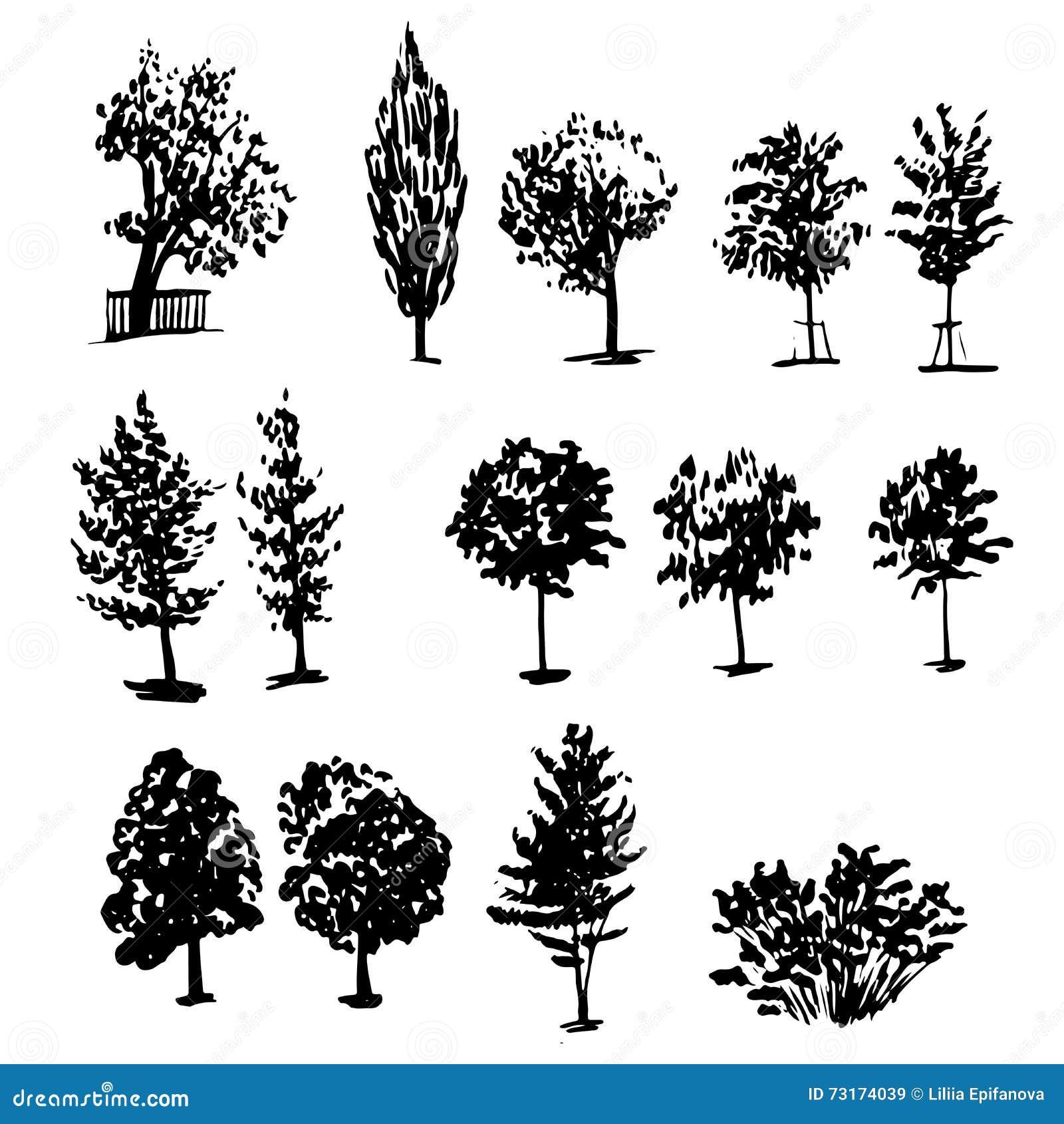 Les types collectiondifferent de dessin d 39 arbres encrent l - Croquis arbre ...