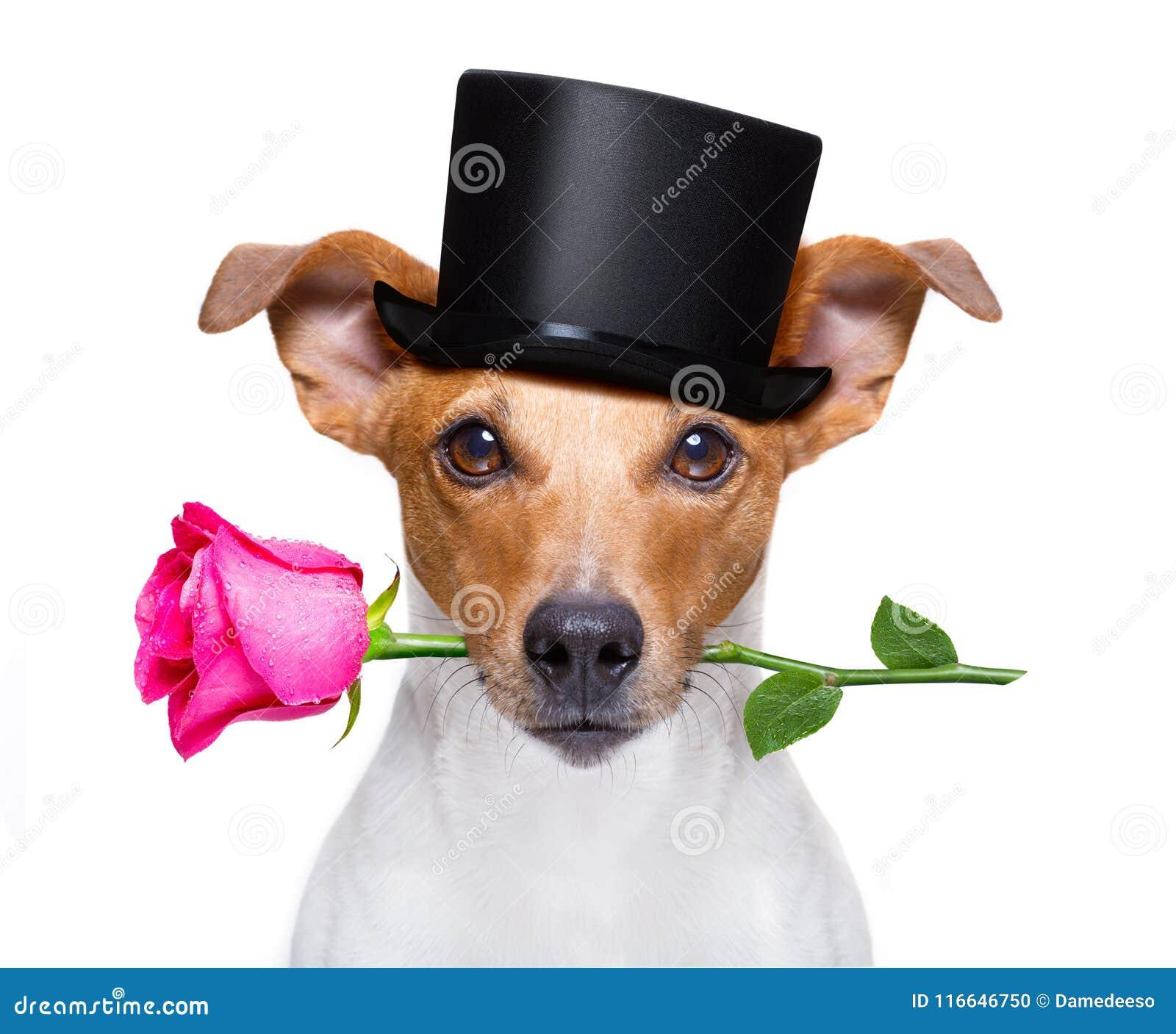 Les valentines poursuivent avec une rose