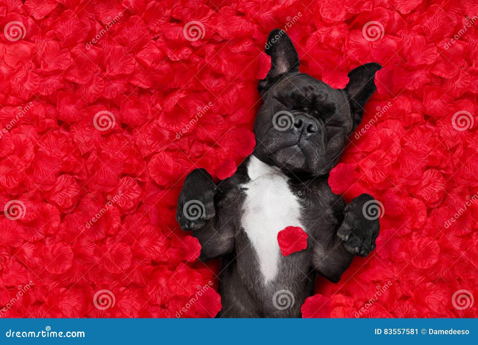 Les valentines poursuivent dans l amour
