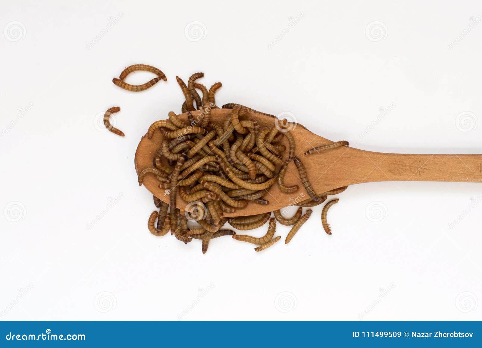 Les vers, repas worms sur la cuillère en bois sur le fond blanc larves du molitor de Tenebrio de scarabée