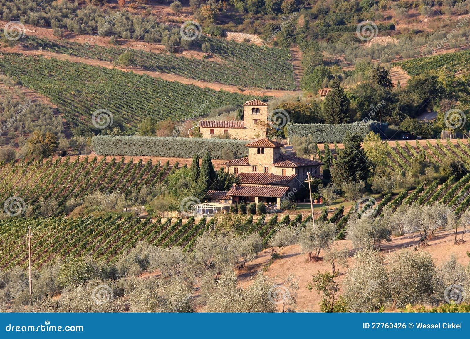Les vignes s approchent de Radda dans Chianti, Toscane, Italie