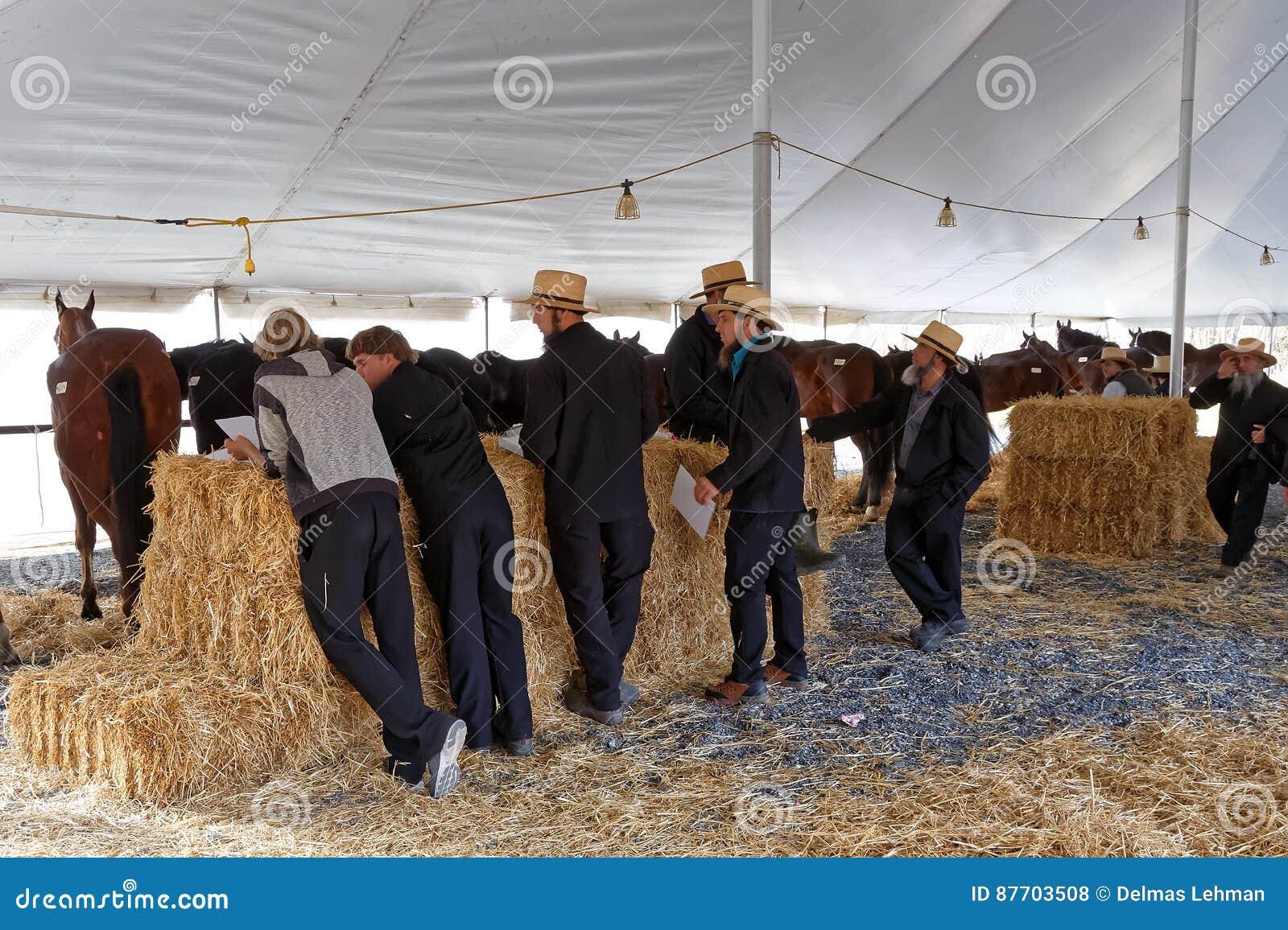 Les volontaires amish tendent des chevaux à vendre