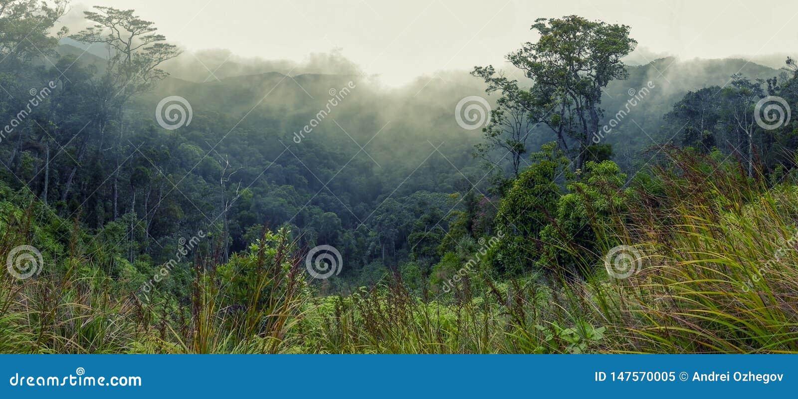 Lesista zbocze góry w niskiej lying on the beach chmurze