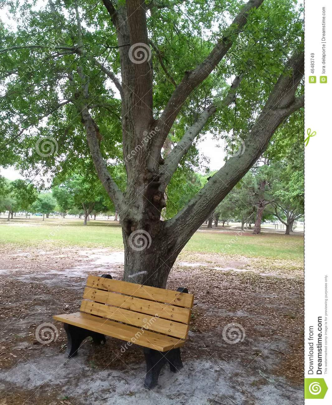 Let 39 s go enjoy the greenery stock photo image 46483749 for Benches that go around trees