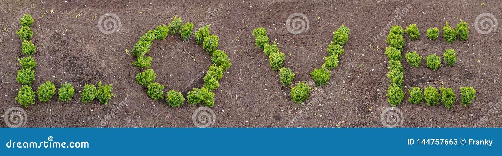 Letras hechas de las plantas vivas que forman el amor de la palabra