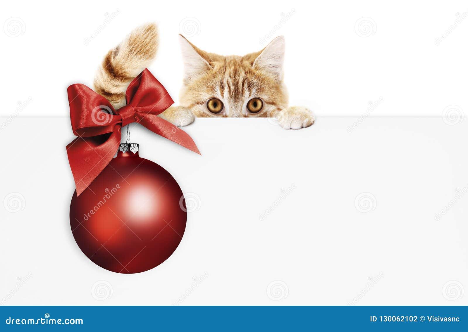 Letrero de la Feliz Navidad o tarjeta de regalo para el clini de la tienda de animales o del veterinario
