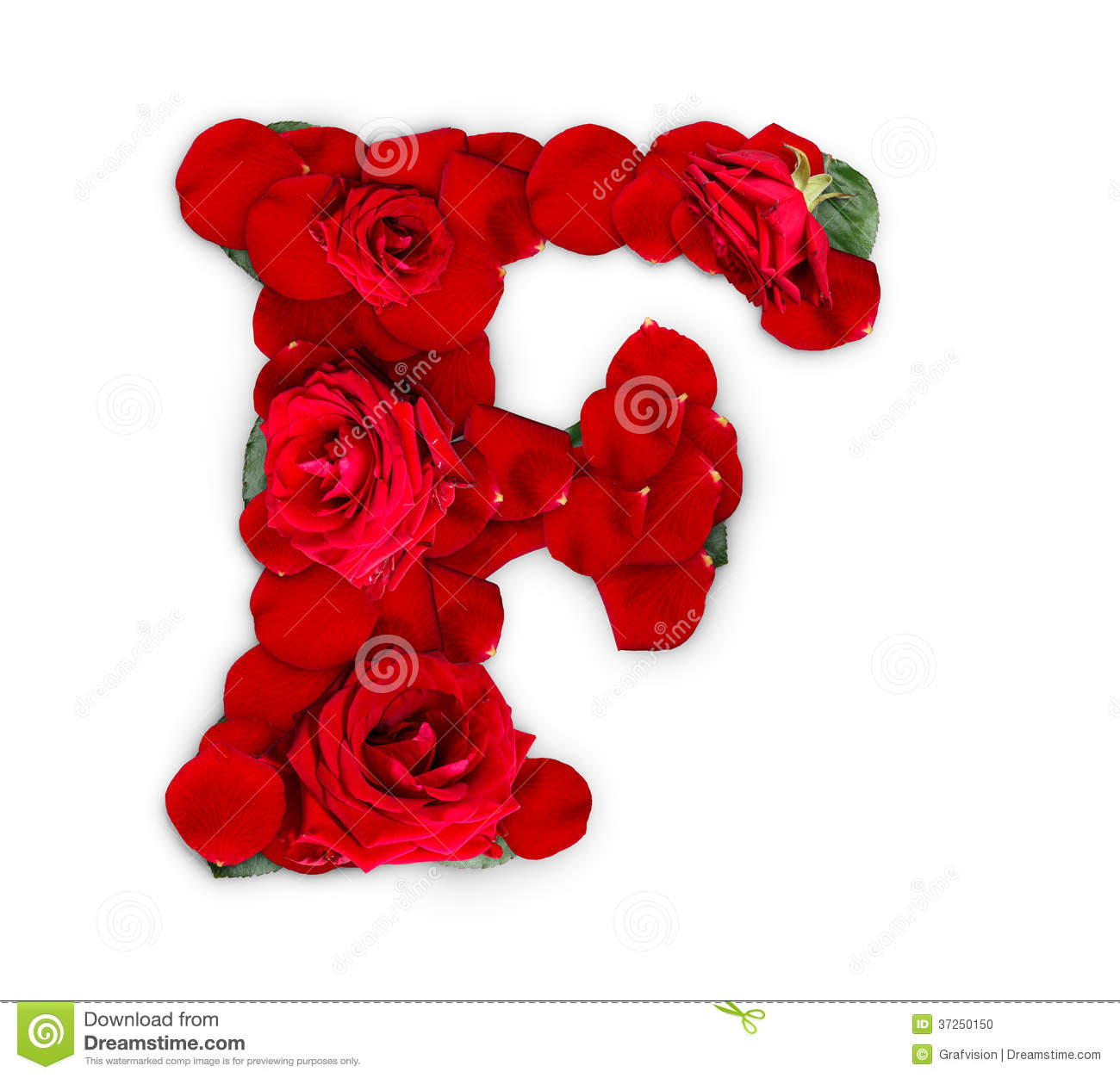 Letter F made from red roses and petals isolated on a white background ...