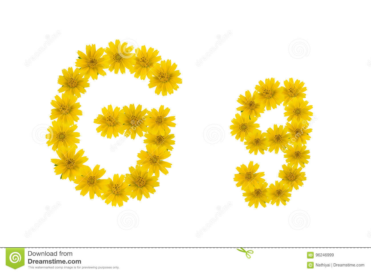 Letter G Alphabet Made From Yellow Wedelia Flowers Stock