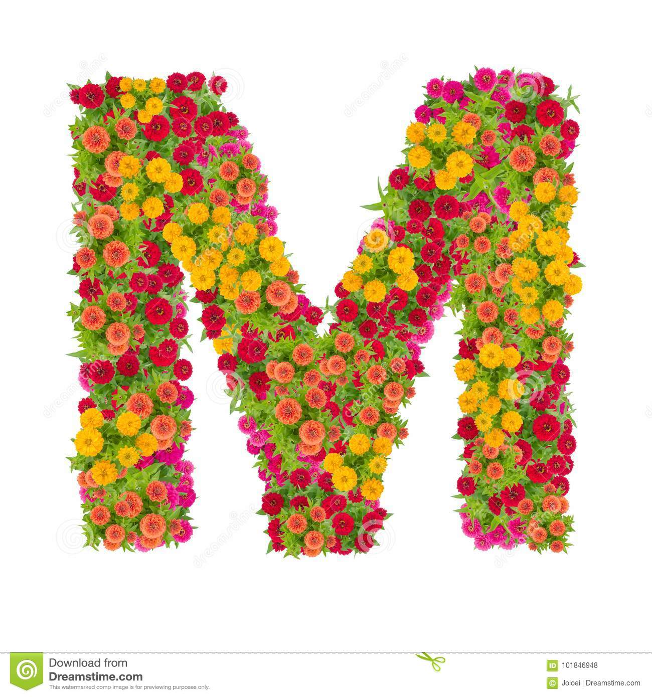 Letter M Alphabet Made From Zinnia Flower Stock Photo Image Of