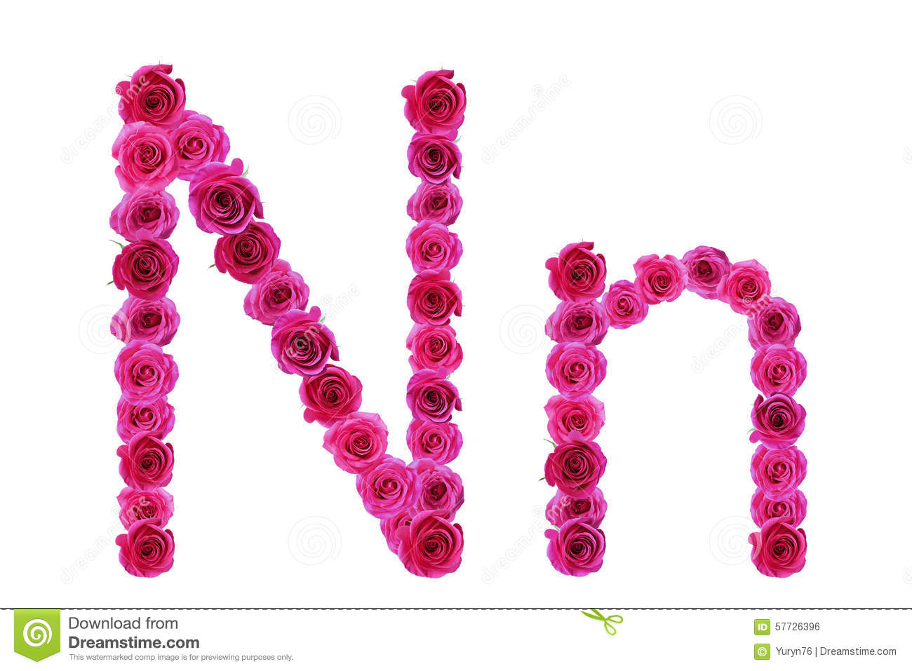 Letter n roses stock photo Image of foliage flora floral