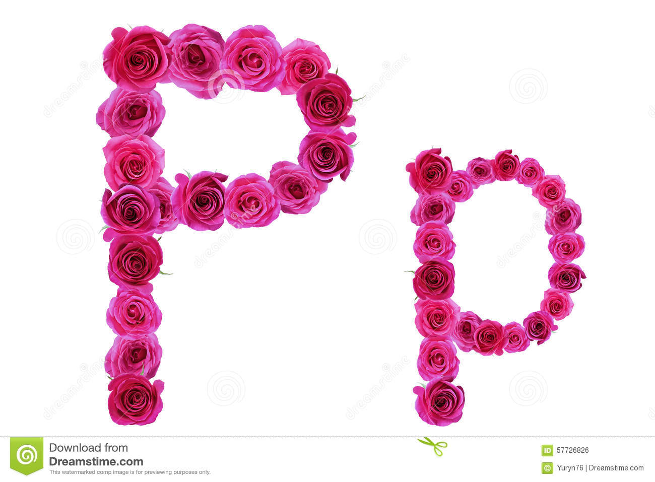The Letter P From Roses Stock Image