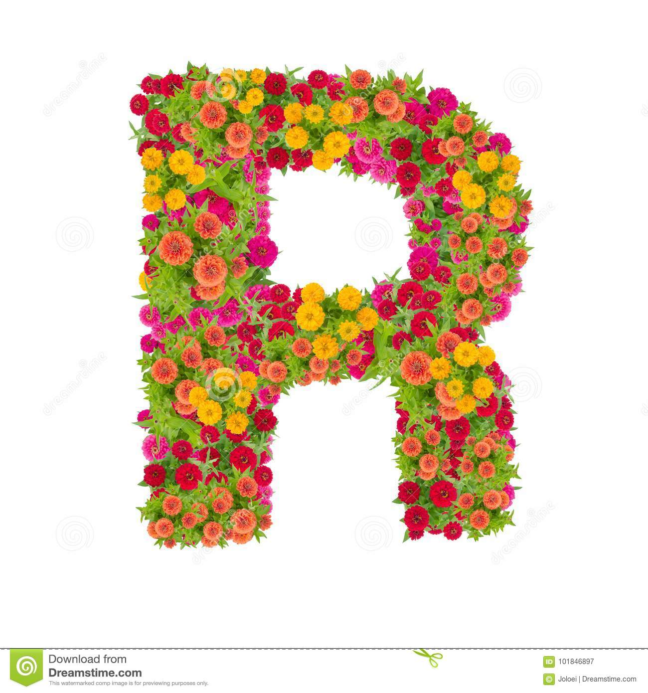 Letter R Alphabet Made From Zinnia Flower Stock Image