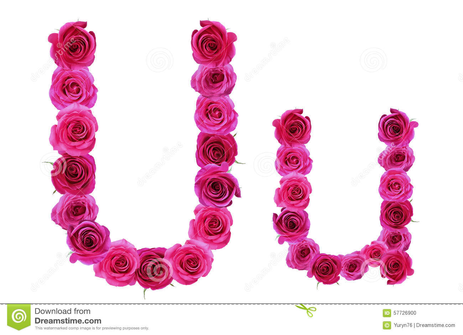 Letter U Of Roses Stock Photo Image Of Rose Flower 57726900