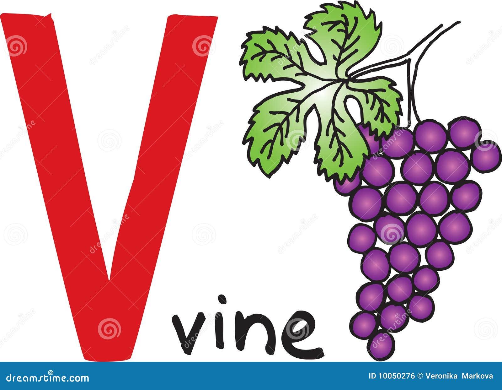 Letter V Vine Royalty Free Stock Image Image 10050276