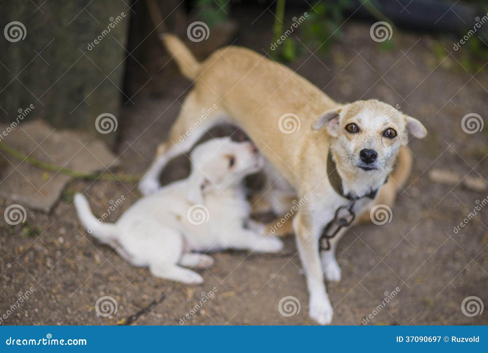 Download Lettle Psa Karmiący Szczeniak Obraz Stock - Obraz złożonej z trawy, dziecko: 37090697